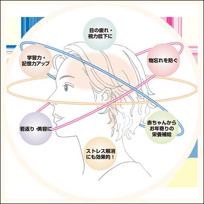 活性化した脳の働きのイメージ